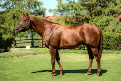Visionaire half brother nominated to Triple
